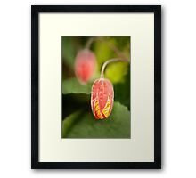 Orange hot flower bud flower photography Framed Print