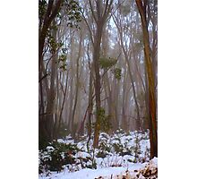 Snow Gums Photographic Print