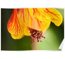 Orange hot flower botanical photography Poster