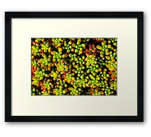 succulent botanical photography Framed Print