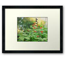 Tree Fuchsia flower photography  Framed Print