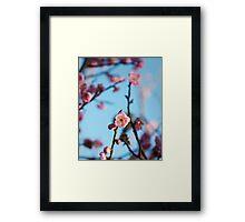 Plum blossom botanical photography Framed Print