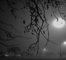 Foggy Night by rhohler