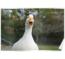 Daisy the Duck Loves to Talk Poster