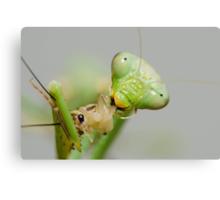 Hungry Mantis Canvas Print