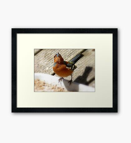 The Sky Is The Limit! - Chaffinch - NZ Framed Print
