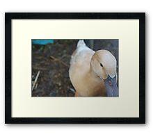 Primrose the Duck Enjoying a Rainy Day Framed Print