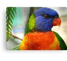 I Am An Eye Catcher.. That Nobody Can Deny!! - Rainbow Lorikeet - NZ Canvas Print