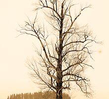 Winter Tree by gresl