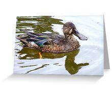 Bill Shoveler - Shoveler Duck - NZ Greeting Card