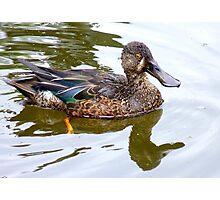 Bill Shoveler - Shoveler Duck - NZ Photographic Print