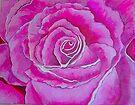 Pink Rose by Lynne Kells (earthangel)