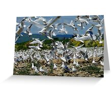 Suspended Animation - Seagull Colony - NZ Greeting Card