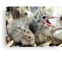 Where Did Everyone Go! - Baby Seagull - NZ Canvas Print