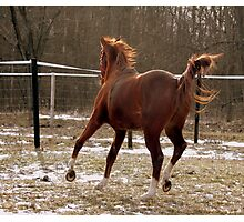 Run Like The Wind Photographic Print