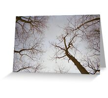 Leafless Ambitions Greeting Card