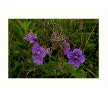 Tundra Flowers Art Print