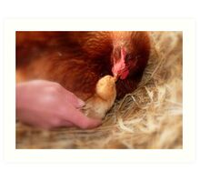 Legal Adoption! - Chickens - NZ Art Print