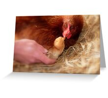 Legal Adoption! - Chickens - NZ Greeting Card