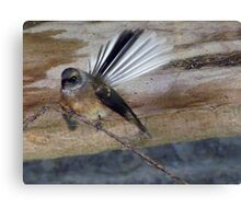 Have You Seen My Fan? - Fantail - NZ Canvas Print