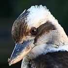 Kookaburra by PPV247