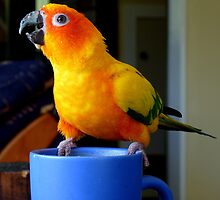 It Doesn't Get Much Better Than This! - Sun Conure by AndreaEL