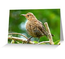 Look I Still Have My Egg Tooth! - Baby Black Bird - NZ Greeting Card