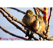 Happy Valentine's Day - Silvereye - NZ Photographic Print