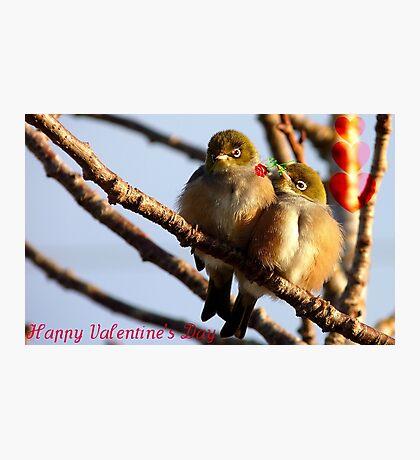 Happy Valentine's Day - Silvereye - NZ Photographic Print