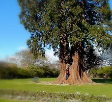 Natures Giant - Large Tree - NZ by AndreaEL