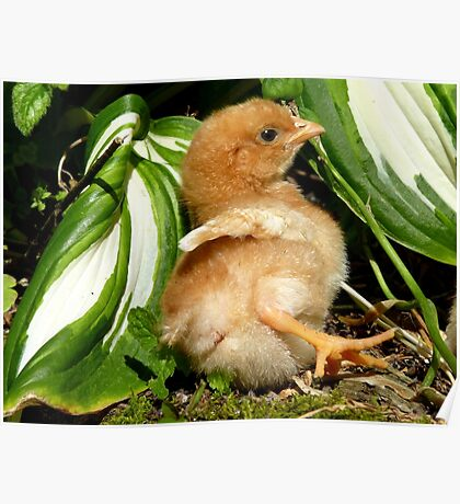 The Leaf Sun Lounger - Chick - NZ Poster