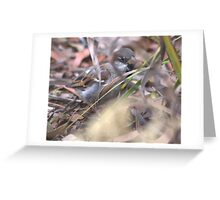 His eye is on the Sparrow...  Greeting Card