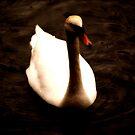 swan by Kacholek