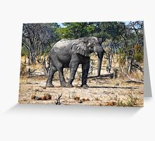 Botswana Elephant Greeting Card