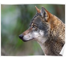 Wildwood Wolf Poster