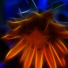 Electric Daisy I by Lesley Smitheringale