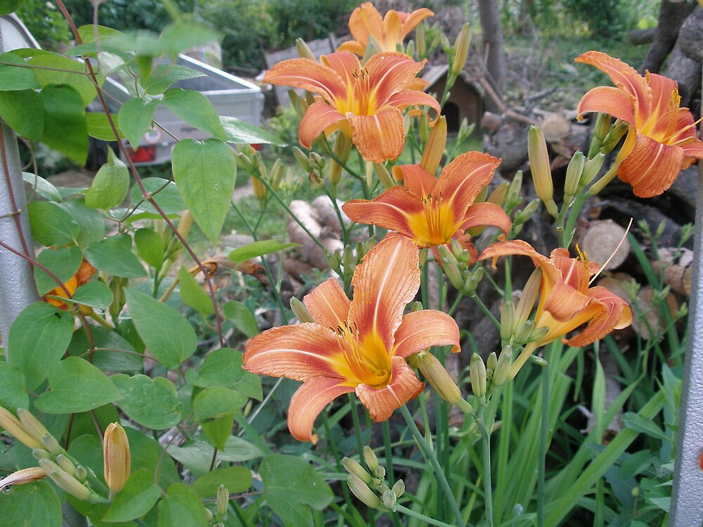 flowery by kveta