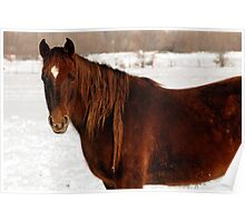 Red Horse - Winter Mane Poster