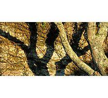 Tree Shadow Photographic Print