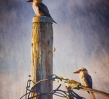 """*""""Kookaburras two"""" was featured in Everyday Women*Kookaburras two by Clare Colins"""