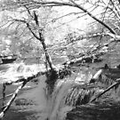 Duck River at Old Stone Fort by © Joe  Beasley IPA