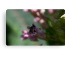 HDR Composite - Multiple Exposure Ghosting of Milkweed 4 Canvas Print