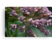 HDR Composite - Multiple Exposure Ghosting of Milkweed Canvas Print
