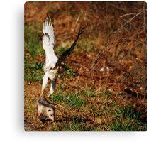 RedTail Hawk With Kill Canvas Print