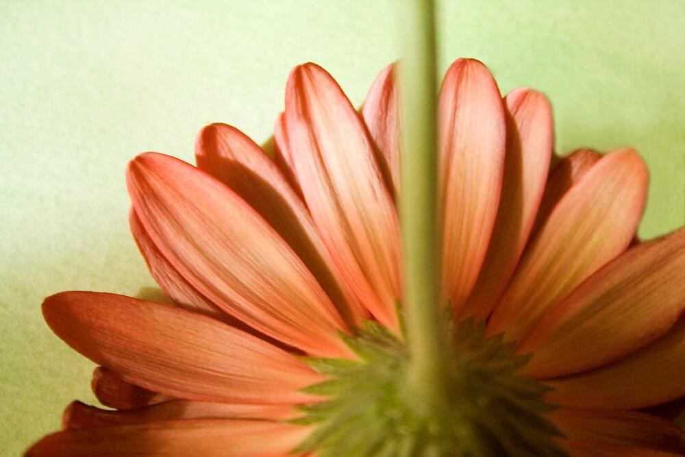 Spring Dreams by sandra arduini