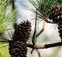 pinecones by rue2