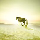 Destiny by jan lakey © Passionate Pixels