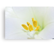 Yellow & White Canvas Print