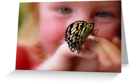 WOW!! A Paper Kite Landed On My Hand! - Paper Kite Butterfly - Dunedin NZ by AndreaEL