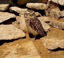 Owl by shakey